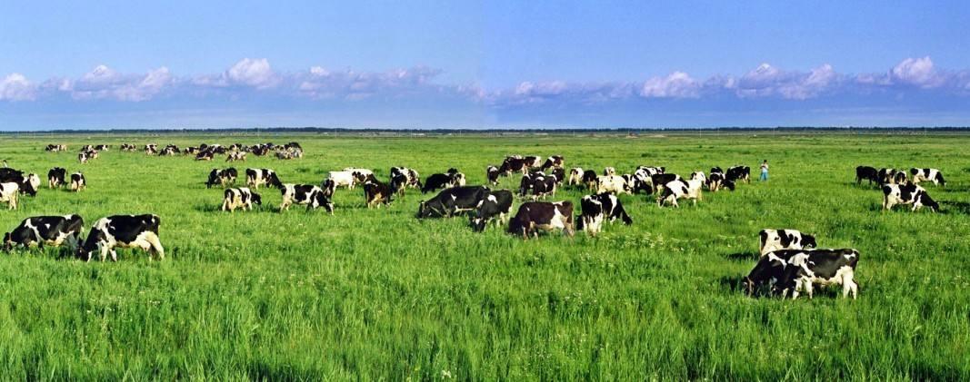 日本要用物联网和AI技术提高奶牛产量